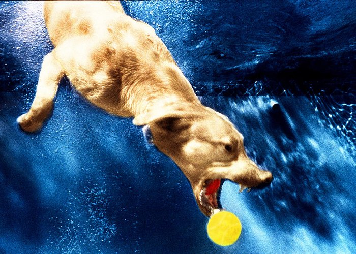 Dog Greeting Card featuring the photograph Chase by Jill Reger