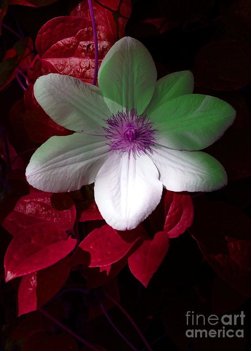 White Flower Greeting Card featuring the photograph Christmas Cheer by Joyce Hutchinson