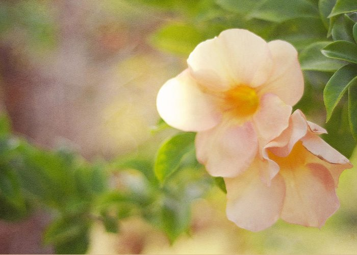 Flower Greeting Card featuring the photograph Closeness by Jenny Rainbow