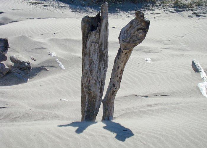 Driftwood Greeting Card featuring the photograph Coastal Driftwood Art Prints Ocean Shore Sand Beach by Baslee Troutman