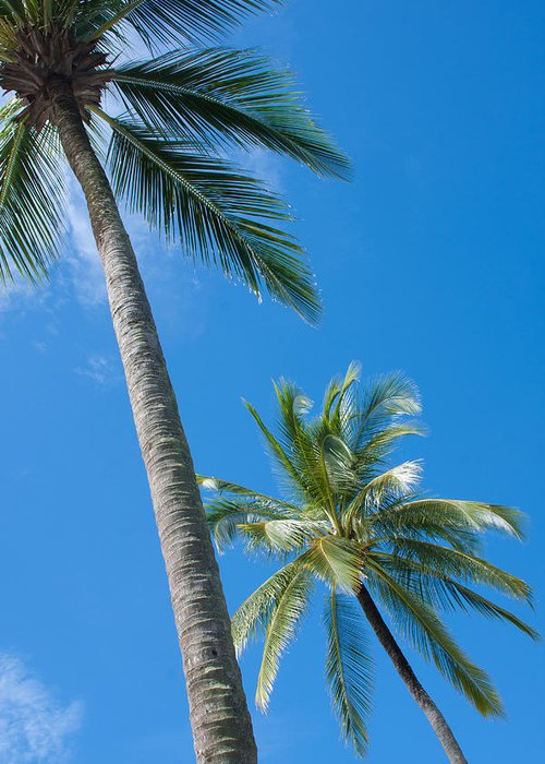 Background Greeting Card featuring the photograph Coconuts by Atiketta Sangasaeng
