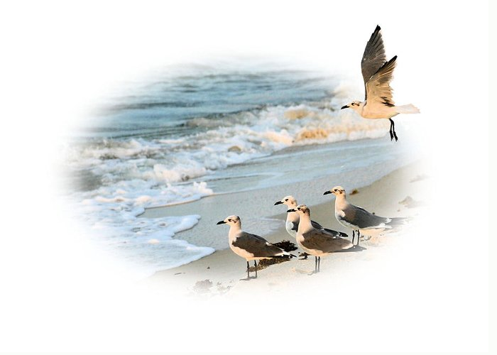 Out Of Bounds Greeting Card featuring the photograph Coming In For A Landing by Kristin Elmquist