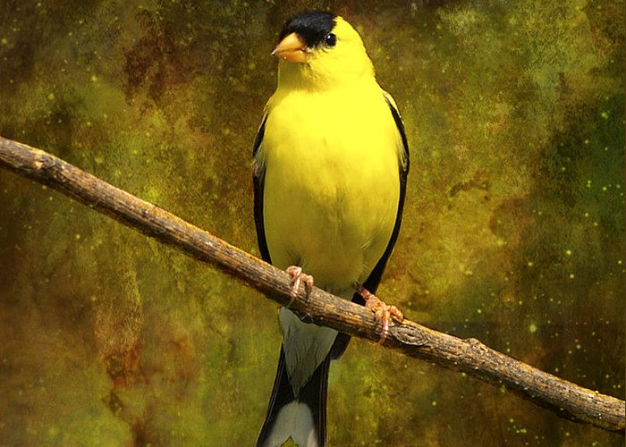 J Larry Walker Greeting Card featuring the digital art Contemplating Goldfinch by J Larry Walker