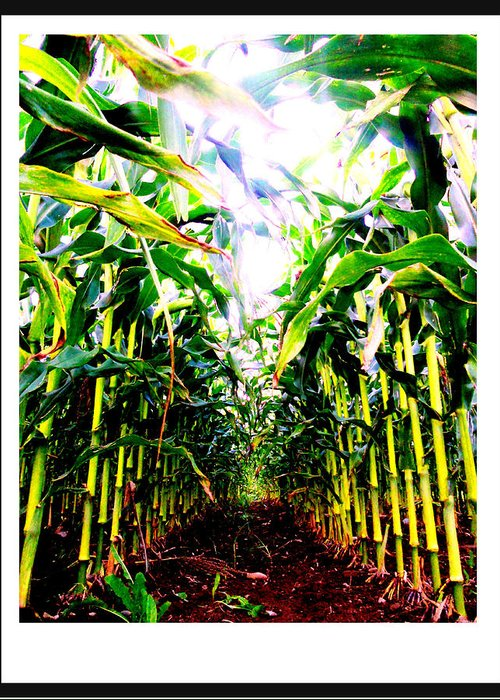Photography Greeting Card featuring the photograph Corn by Kara Ray