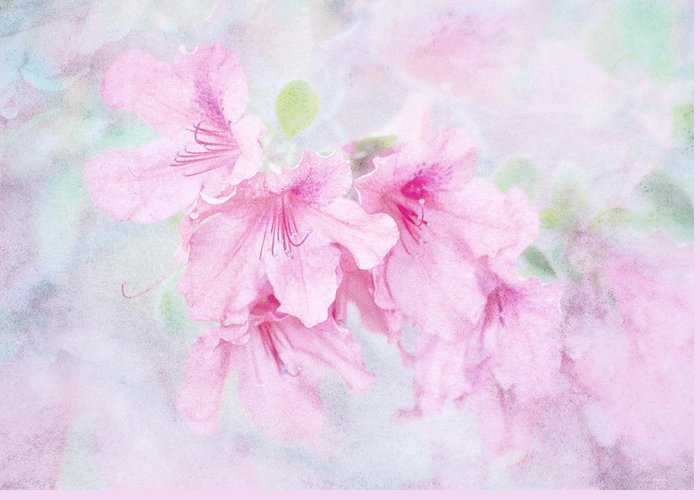 Floral Greeting Card featuring the photograph Cotton Candy by Brenda Bryant
