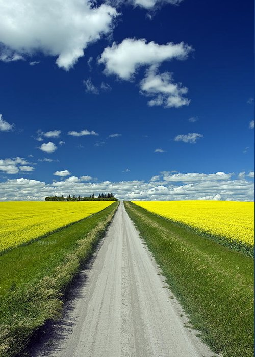 Blooming Greeting Card featuring the photograph Country Road With Blooming Canola by Dave Reede