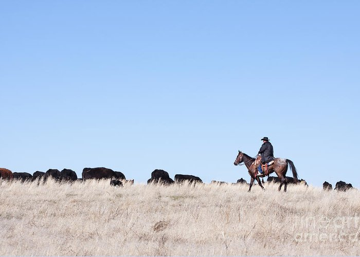 Cowboy Greeting Card featuring the photograph Cowboy And Cattle by Cindy Singleton