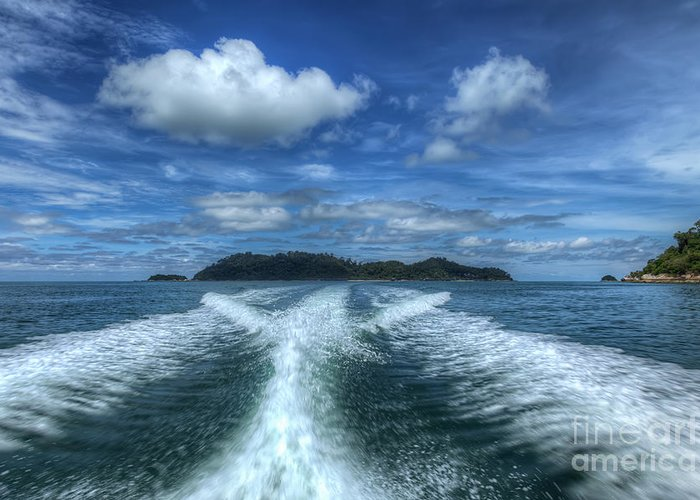 Tropical Greeting Card featuring the photograph Cruising by Adrian Evans