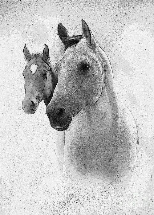 Horse Greeting Card featuring the photograph Curiosity by Betty LaRue
