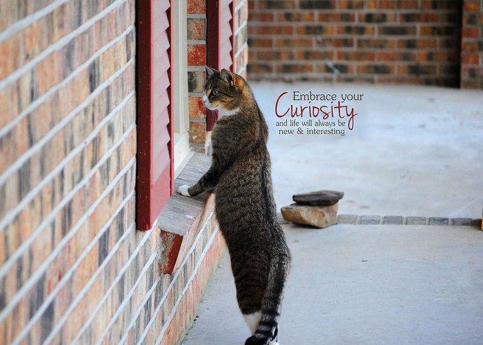 Curious Greeting Card featuring the photograph Curiosity Inspirational Cat Photograph by Jai Johnson