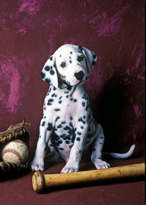 Dalmatian Puppies Greeting Card featuring the photograph Dalmatian Puppy With Baseball by Garry Gay