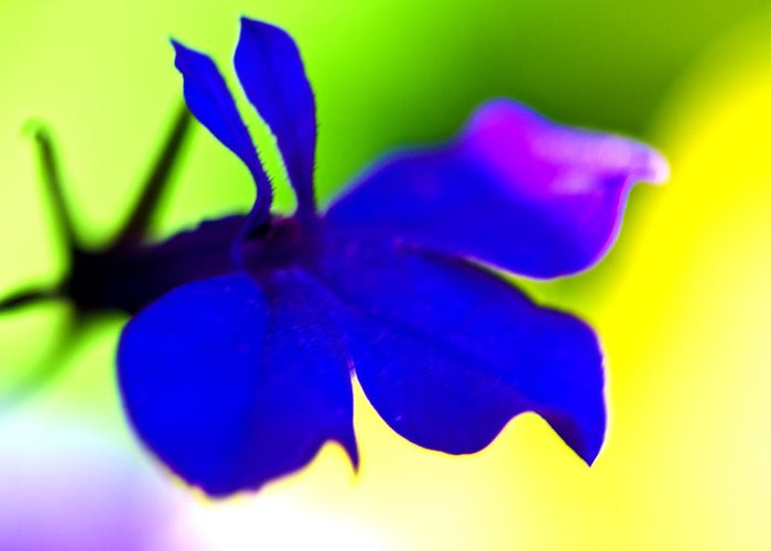 Blue Flower Greeting Card featuring the photograph Deeply Blue by Marie Jamieson