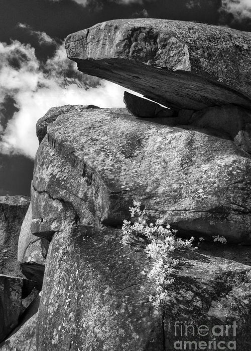 Infrared Greeting Card featuring the photograph Devil's Den - 34 by Paul W Faust - Impressions of Light