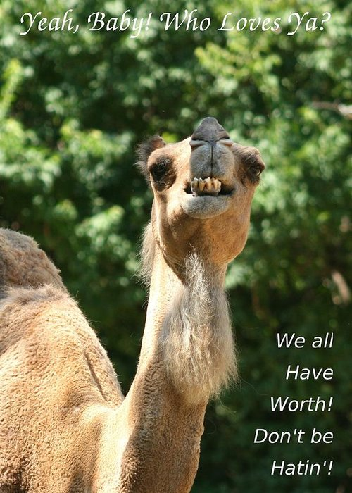Camel. Dromedary Greeting Card featuring the photograph Dont Be Hatin by David Dunham