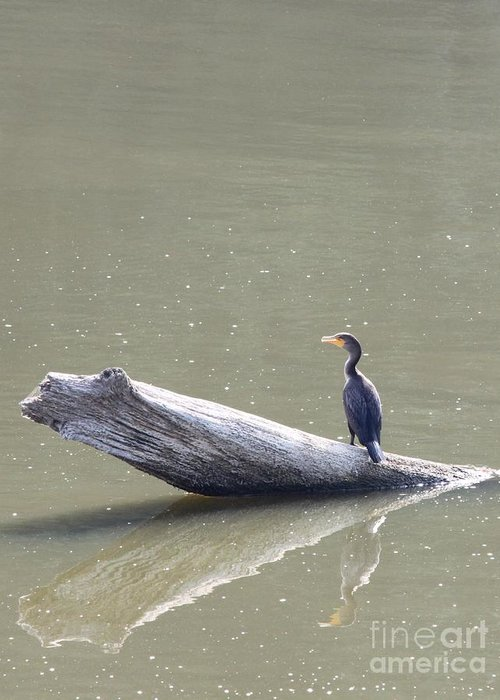 Nature Greeting Card featuring the photograph Double-crester Cormorant by Jack R Brock