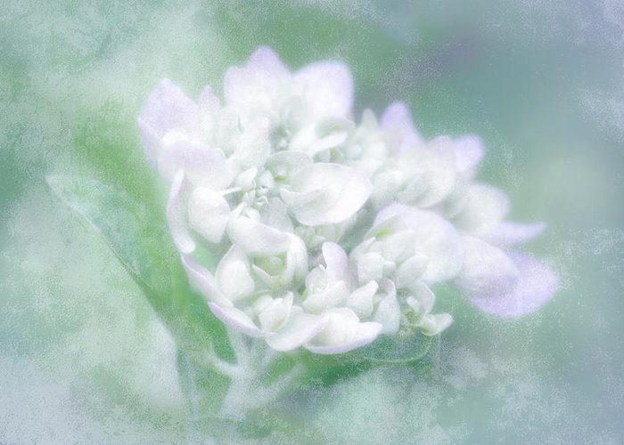 Hydrangea Greeting Card featuring the photograph Dreaming Floral by Brenda Bryant