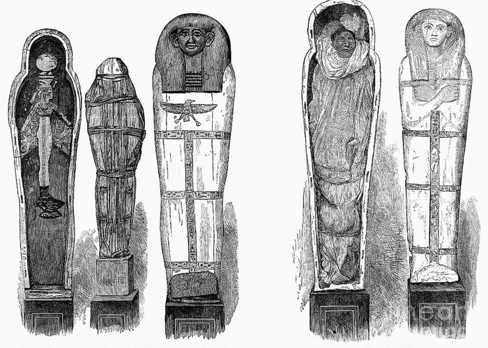1881 Greeting Card featuring the photograph Egypt: Royal Mummies, 1882 by Granger
