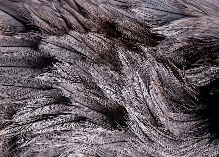 Feathers Greeting Card featuring the photograph Emu Feathers by Hakon Soreide