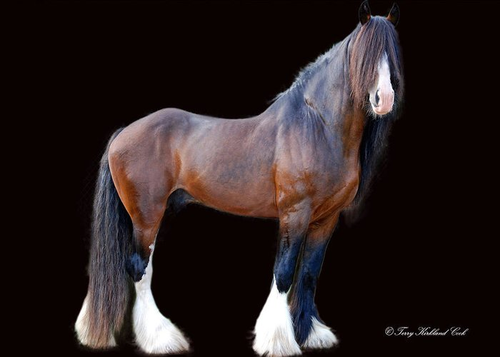 Horse Greeting Card featuring the photograph English Shire Study by Terry Kirkland Cook