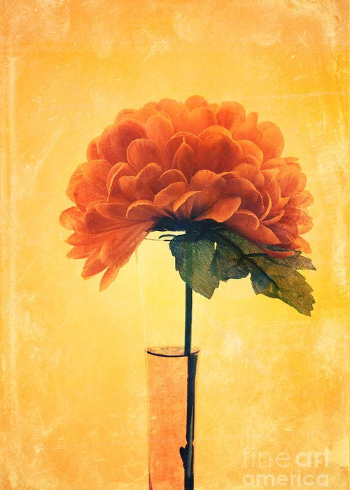 still Life Greeting Card featuring the photograph Estillo - 01i2t03 by Variance Collections