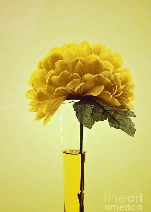 Yellow Greeting Card featuring the photograph Estillo - S03-01q2 by Variance Collections