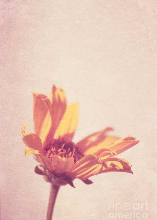 Daisy Greeting Card featuring the photograph Expression - S07ct01 by Variance Collections