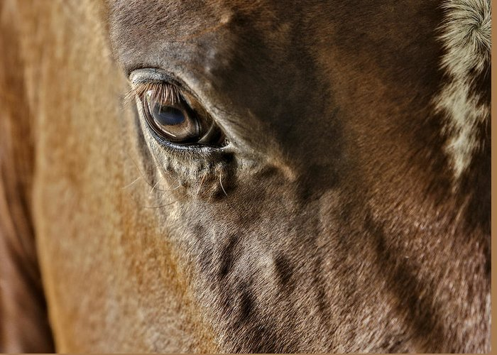 Horse Greeting Card featuring the photograph Eye Of The Horse by Susan Candelario