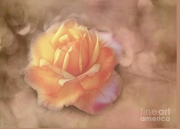 Rose Greeting Card featuring the photograph Faded Memories by Judi Bagwell