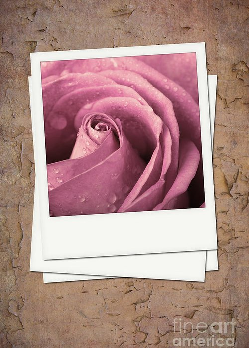 Aged Greeting Card featuring the photograph Faded Rose Photo by Jane Rix