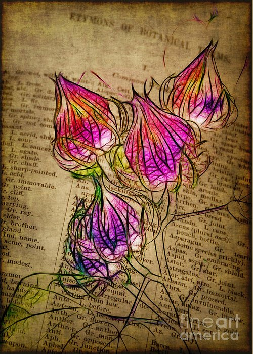 Seedpods Greeting Card featuring the photograph Faerie Caps by Judi Bagwell