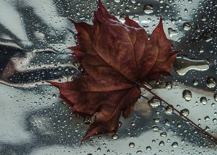 Still Life Greeting Card featuring the photograph Fallen Leaf by Vladimir Kholostykh