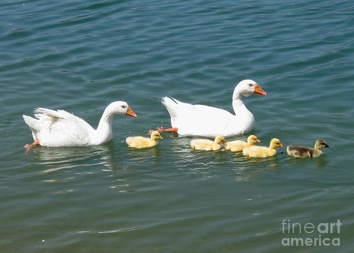 Adorable Greeting Card featuring the photograph Family Outing On The Lake by Ed Churchill