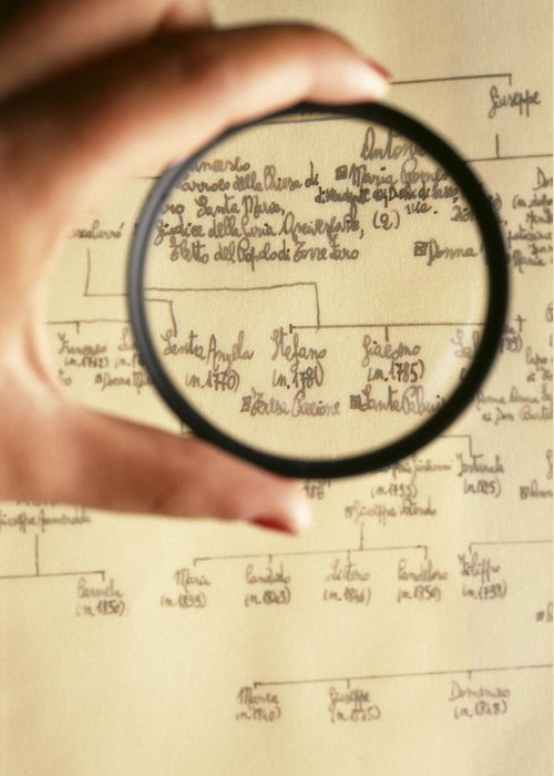 Magnifying Glass Greeting Card featuring the photograph Family Tree by Mauro Fermariello