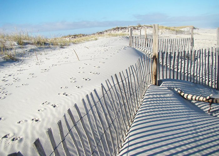 Dunes Greeting Card featuring the photograph Fences Shadows And Sand Dunes by Mother Nature