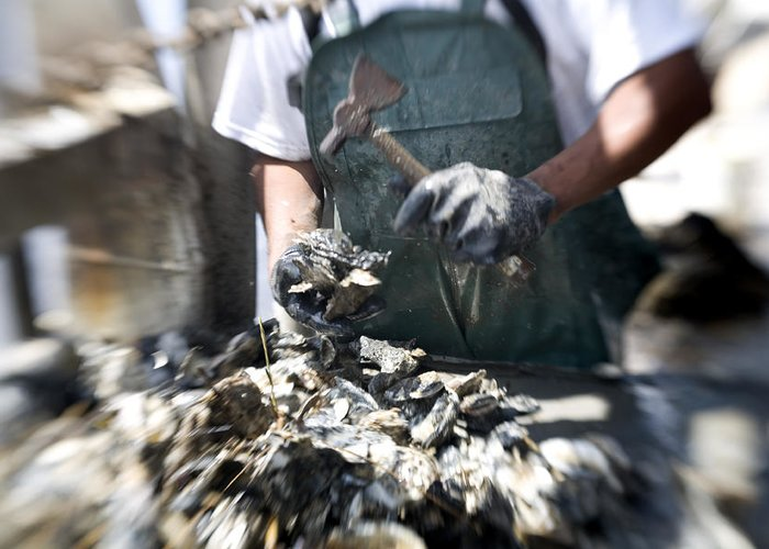Day Greeting Card featuring the photograph Fisherman Separating Clumps Of Oysters by Tyrone Turner