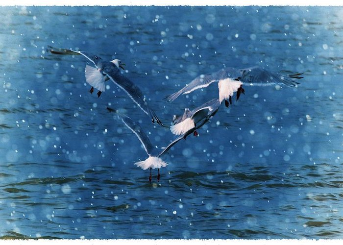 Seagulls Greeting Card featuring the photograph Flock by Debra Miller
