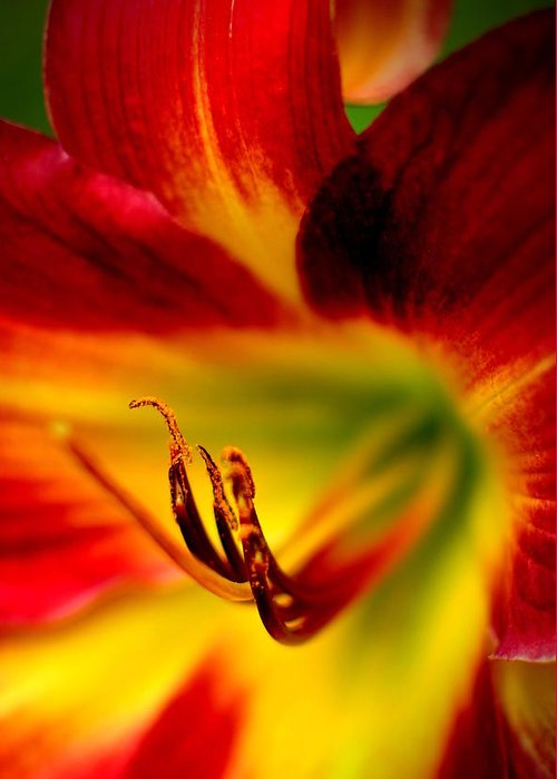Intense Greeting Card featuring the photograph Floral Macro Of A Blossom by Floyd Menezes