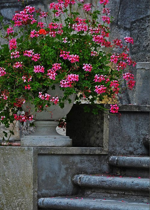 Flowers On The Steps Greeting Card featuring the photograph Flowers On The Steps by Mary Machare