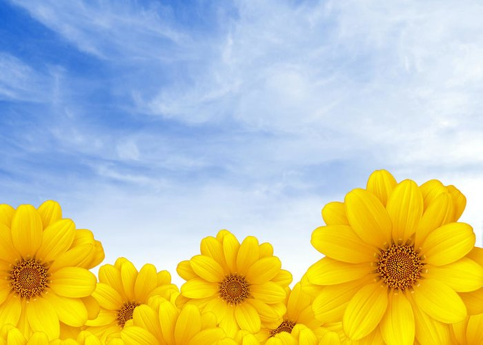 Background Greeting Card featuring the photograph Flowers Over Sky by Carlos Caetano