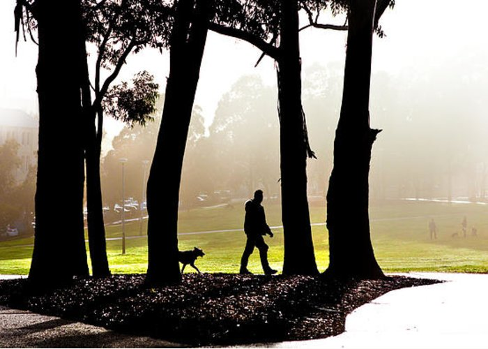 Walking The Dog Greeting Card featuring the photograph Foggy Day To Walk The Dog by Harry Neelam