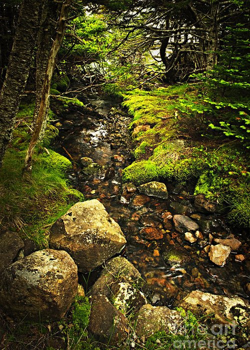 Forest Greeting Card featuring the photograph Forest Creek by Elena Elisseeva