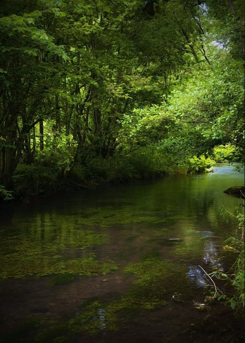 Background Greeting Card featuring the photograph Forest River by Svetlana Sewell