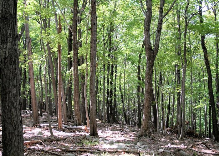 Forest Greeting Card featuring the photograph Forest Through The Trees by