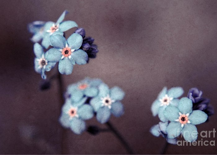 Brown Greeting Card featuring the photograph Forget Me Not 01 - S05dt01 by Variance Collections