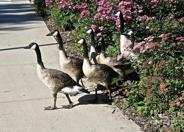 Goose Greeting Card featuring the photograph Garden Geese Parade by Susan Herber