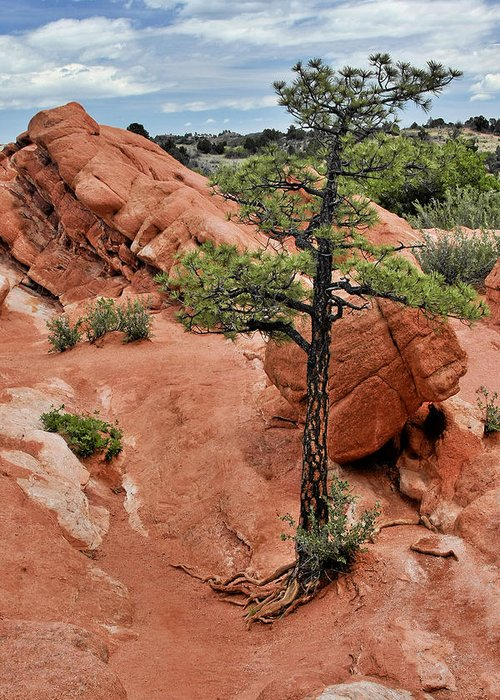 Natural Greeting Card featuring the photograph Garden Of The Gods - The Name Says It All by Christine Till
