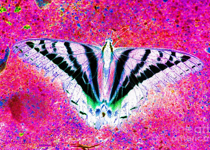 Butterfly Greeting Card featuring the photograph Ghost Butterfly by Nick Gustafson
