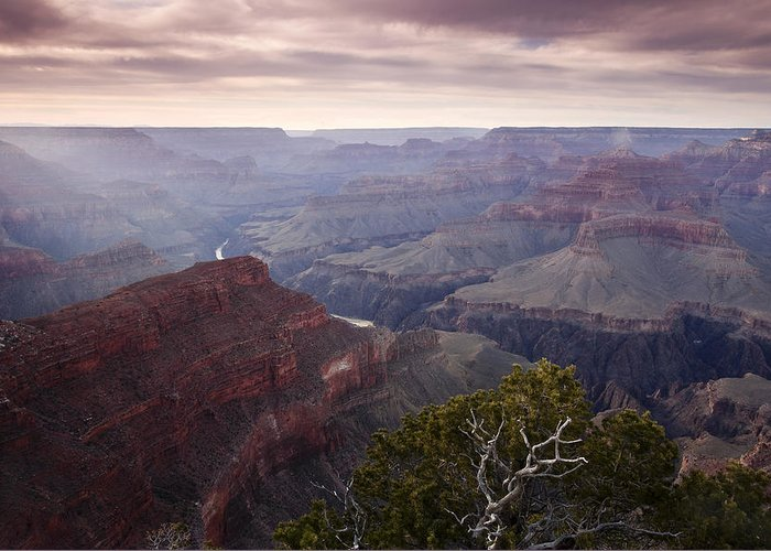 National Park Greeting Card featuring the photograph Gnarly Tree In The Canyon by Andrew Soundarajan