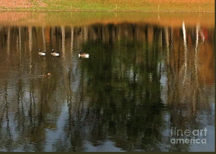 Greeting Card featuring the photograph Goose Goose Duck Goose by Trish Hale