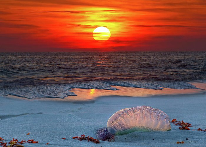 There Is Never A Bad Sunset On This Gulf Of Mexico Beach Greeting Card featuring the photograph Grayton Beach Sunset IIi by Charles Warren